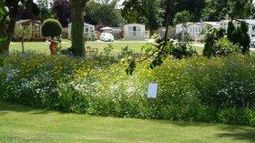 6 - Wildflower garden
