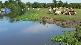 Cattle on the tow path  (© © Copyright Mat Fascione (https://www.geograph.org.uk/profile/11776) and licensed for reuse (http://www.geograph.org.uk/reuse.php?id=516845) under this Creative Commons Licence (https://creativecommons.org/licenses/by-sa/2.0/).)