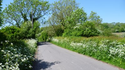 Lane passing over the former Elham Valley Railway at Wingmore - Just past the telegraph pole, this lane passes over the trackbed of the former Elham Valley Railway. The bridge parapet can just be seen. The line opened in 1887 and closed to passengers in 1940, closing completely in 1947. (© © Copyright Marathon and licensed for reuse under this Creative Commons Licence (http://www.geograph.org.uk/reuse.php?id=4495667))