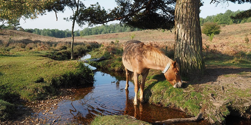 Best UK National Parks Guide - The New Forest
