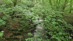 Sougha Gill in Skipton Woods (© © Copyright Graham Robson (http://www.geograph.org.uk/profile/8664) and licensed for reuse (http://www.geograph.org.uk/reuse.php?id=4641767) under this Creative Commons Licence (https://creativecommons.org/licenses/by-sa/2.0/).)