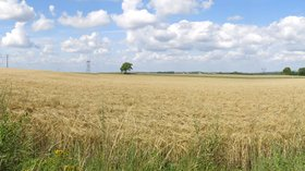 Cereal field in Dosches (Aube) (© By Tangopaso (Self-photographed) [Public domain], via Wikimedia Commons)
