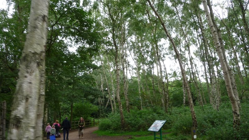 Sherwood Forest - Picture of Sherwood Forest