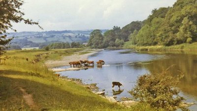 River Wye near Hay on Wye with cattle drinking  (© © Copyright Christine Matthews (https://www.geograph.org.uk/profile/1777) and licensed for reuse (http://www.geograph.org.uk/reuse.php?id=715363) under this Creative Commons Licence (https://creativecommons.org/licenses/by-sa/2.0/).)