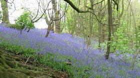 Badby Woods (© © Copyright chris cox (http://www.geograph.org.uk/profile/4218) and licensed for reuse (http://www.geograph.org.uk/reuse.php?id=105873) under this Creative Commons Licence (https://creativecommons.org/licenses/by-sa/2.0/).)