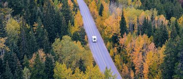 camper-car-fir-trees-24698