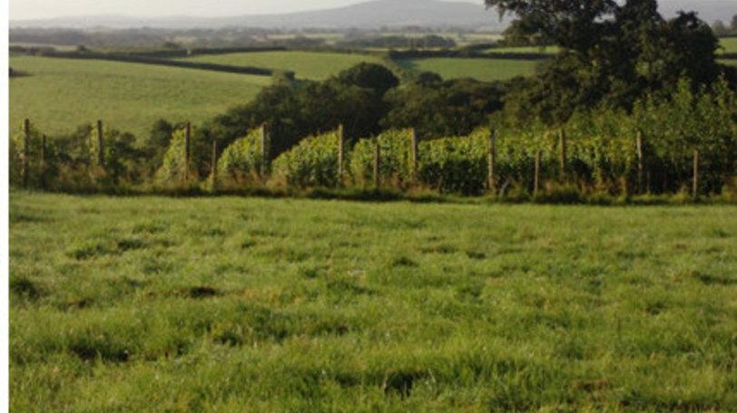 Ten Acres Vineyard Camping