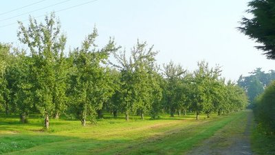 Cider orchards east of Hereford (© Jonathan Billinger/Cider orchards east of Hereford 2 (original photo: https://commons.wikimedia.org/wiki/File:Cider_orchards_east_of_Hereford_2_-_geograph.org.uk_-_899483.jpg))