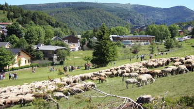 In the region - Gard L'Espérou Fête de la transhumance (© By User:Ancalagon (Own work) [GFDL (http://www.gnu.org/copyleft/fdl.html) or CC BY-SA 3.0 (http://creativecommons.org/licenses/by-sa/3.0)], via Wikimedia Commons (GFDL copy: https://en.wikipedia.org/wiki/GNU_Free_Documentation_License, original photo: https://commons.wikimedia.org/wiki/File:France_Gard_L%27Esp%C3%A9rou_F%C3%AAte_de_la_transhumance_2009_1258.jpg))