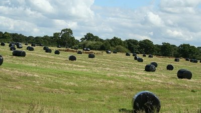 Hay bales in Horton by Malpas (© Geoff Evans [CC BY-SA 2.0 (https://creativecommons.org/licenses/by-sa/2.0)], via Wikimedia Commons (original photo: https://commons.wikimedia.org/wiki/File:Hay_bales_in_Horton_by_Malpas,_Cheshire,_England.jpg))