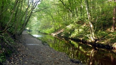 Eller Beck in Skipton Woods  (© © Copyright Graham Hogg (https://www.geograph.org.uk/profile/47667) and licensed for reuse (http://www.geograph.org.uk/reuse.php?id=5143719) under this Creative Commons Licence (https://creativecommons.org/licenses/by-sa/2.0/).)