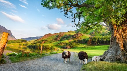 Caravan holidays in Cumbria - Forest Views Caravan Park, Cumbria