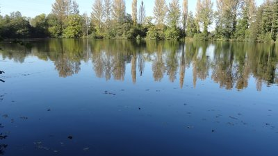 Carp Lake from Denham Lock Wood (© By Dudley Miles [CC BY-SA 3.0  (https://creativecommons.org/licenses/by-sa/3.0)], from Wikimedia Commons (original photo: https://commons.wikimedia.org/wiki/File:Carp_Lake_from_Denham_Lock_Wood.jpg))
