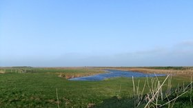The Swale National Nature Reserve, Sheppey, in early March  (© © Copyright Stefan Czapski (https://www.geograph.org.uk/profile/19114) and licensed for reuse (https://www.geograph.org.uk/reuse.php?id=2294664) under this Creative Commons Licence (https://creativecommons.org/licenses/by-sa/2.0/).)