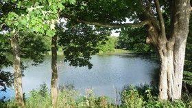 Swan Pool, Shobdon  (© © Copyright Stephen Richards (https://www.geograph.org.uk/profile/34784) and licensed for reuse (https://www.geograph.org.uk/reuse.php?id=5464128) under this Creative Commons Licence (https://creativecommons.org/licenses/by-sa/2.0/).)