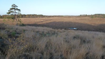 Dersingham Bog (National Nature Reserve)  (© © Copyright Richard Humphrey (https://www.geograph.org.uk/profile/39484) and licensed for reuse (https://www.geograph.org.uk/reuse.php?id=2718433) under this Creative Commons Licence (https://creativecommons.org/licenses/by-sa/2.0/).)