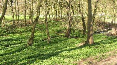 Wooded_valley_in_Shibden_Park,_Halifax_-_geograph.org.uk_-_162225 (© Humphrey Bolton/Wooded valley in Shibden Park, Southowram, Halifax (original photo: https://commons.wikimedia.org/wiki/File:Wooded_valley_in_Shibden_Park,_Halifax_-_geograph.org.uk_-_162225.jpg))