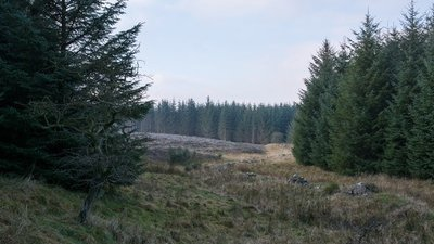 Coniferous plantation on Richmond Out Moor  (© © Copyright Trevor Littlewood (https://www.geograph.org.uk/profile/39198) and licensed for reuse (http://www.geograph.org.uk/reuse.php?id=5232448) under this Creative Commons Licence (https://creativecommons.org/licenses/by-sa/2.0/).)