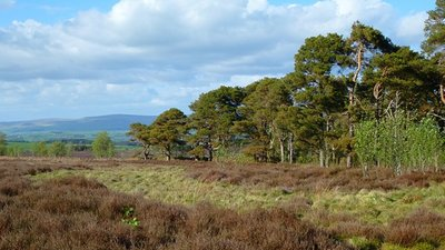 Wan Fell, Penrith  (© © Copyright Andrew Smith (https://www.geograph.org.uk/profile/2562) and licensed for reuse (https://www.geograph.org.uk/reuse.php?id=4334289) under this Creative Commons Licence (https://creativecommons.org/licenses/by-sa/2.0/).)