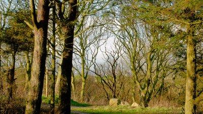 Cornelian_Bay,_Scarborough,_North_Yorkshire_(1_of_4)