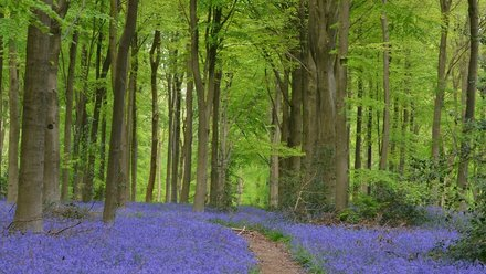 Kent holidays - Thriftwood Country Park