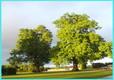 Picture of Kings Lynn Caravan & Camping Park, Norfolk, East England