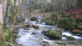 In the Jura region: rivière le herisson (© By Thesupermat (Own work) [GFDL (http://www.gnu.org/copyleft/fdl.html) or CC BY-SA 3.0 (http://creativecommons.org/licenses/by-sa/3.0)], via Wikimedia Commons (GFDL copy: https://en.wikipedia.org/wiki/GNU_Free_Documentation_License, original photo: https://commons.wikimedia.org/wiki/File:Jura_France,_rivi%C3%A8re_le_herisson.JPG))