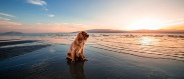 Cornwall holidays with pets - Dog relaxing on a beach holiday