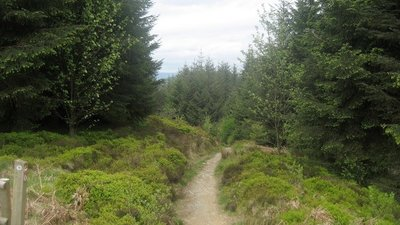 In Llandegla Forest  (© © Copyright Chris Heaton (https://www.geograph.org.uk/profile/3298) and licensed for reuse (https://www.geograph.org.uk/reuse.php?id=1310795) under this Creative Commons Licence (https://creativecommons.org/licenses/by-sa/2.0/).)