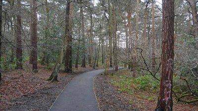 Harrogate Link Path through The Pinewoods  (© © Copyright N Chadwick (https://www.geograph.org.uk/profile/3101) and licensed for reuse (http://www.geograph.org.uk/reuse.php?id=4812998) under this Creative Commons Licence (https://creativecommons.org/licenses/by-sa/2.0/).)