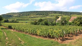 Santenay - Vignoble (© By photography taken by Christophe.Finot (Own work) [CC BY-SA 3.0 (http://creativecommons.org/licenses/by-sa/3.0)], via Wikimedia Commons (original photo: https://commons.wikimedia.org/wiki/File:Santenay_-_Vignoble_5.JPG))