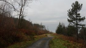 The Cleveland Way in Guisborough Woods  (© © Copyright Anthony Foster (https://www.geograph.org.uk/profile/28839) and licensed for reuse (http://www.geograph.org.uk/reuse.php?id=5662092) under this Creative Commons Licence (https://creativecommons.org/licenses/by-sa/2.0/).)