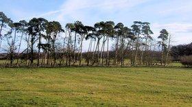 Ridge and Furrow near Hawkhills, Easingwold, Yorkshire (© Kevin Gordon/Ridge and Furrow near Hawkhills, Easingwold, Yorkshire (original photo: https://commons.wikimedia.org/wiki/File:Ridge_and_Furrow_near_Hawkhills,_Easingwold,_Yorkshire_-_geograph.org.uk_-_730502.jpg))