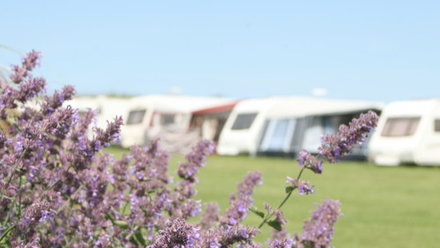 Picture of Carnevas Farm Holiday Park, Cornwall, South West England