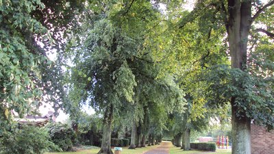 Tree-lined footpath, Higher Bebington Road close to the caravan site (© By Rept0n1x [GFDL (http://www.gnu.org/copyleft/fdl.html) or CC BY-SA 3.0 (https://creativecommons.org/licenses/by-sa/3.0)], from Wikimedia Commons (GFDL copy: https://en.wikipedia.org/wiki/GNU_Free_Documentation_License, original photo: https://commons.wikimedia.org/wiki/File:Tree-lined_footpath,_Higher_Bebington_Road_-_DSC09278.JPG))