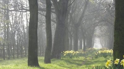 Avenue of Trees and Daffodils besides Claremont Road  - A beautiful spring morning in Newcastle upon Tyne (© © Copyright Andrew Tryon (https://www.geograph.org.uk/profile/104377) and licensed for reuse (http://www.geograph.org.uk/reuse.php?id=4335473) under this Creative Commons Licence (https://creativecommons.org/licenses/by-sa/2.0/).)