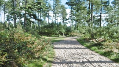 Wareham Forest, forestry road junction  (© © Copyright Mike Faherty (https://www.geograph.org.uk/profile/30470) and licensed for reuse (https://www.geograph.org.uk/reuse.php?id=5150499) under this Creative Commons Licence (https://creativecommons.org/licenses/by-sa/2.0/).)