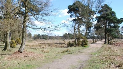 Skipwith Common  (© © Copyright Simon Huguet (https://www.geograph.org.uk/profile/24370) and licensed for reuse (http://www.geograph.org.uk/reuse.php?id=1830626) under this Creative Commons Licence (https://creativecommons.org/licenses/by-sa/2.0/).)