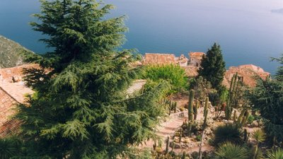 In the region: Alpes Maritimes Eze Jardin botanique (© By No machine-readable author provided. Calips assumed (based on copyright claims). [GFDL (http://www.gnu.org/copyleft/fdl.html), CC-BY-SA-3.0 (http://creativecommons.org/licenses/by-sa/3.0/) or CC BY-SA 2.5-2.0-1.0 (http://creativecommons.org/licenses/by-sa/2.5-2.0-1.0)], via Wikimedia Commons (GFDL copy: https://en.wikipedia.org/wiki/GNU_Free_Documentation_License, original photo: https://commons.wikimedia.org/wiki/File:France_Alpes-Maritimes_Eze_Jardin_botanique_05.jpg))
