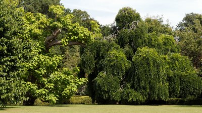 Arboriculture_and_lawn_at_Quex_House_Birchington_Kent_England