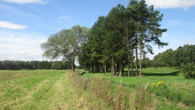 Along the beck south of Easingwold Golf Course  - Along the beck south of Easingwold Golf Course (© © Copyright John Slater (https://www.geograph.org.uk/profile/71339) and licensed for reuse (https://www.geograph.org.uk/reuse.php?id=5501311) under this Creative Commons Licence (https://creativecommons.org/licenses/by-sa/2.0/).)