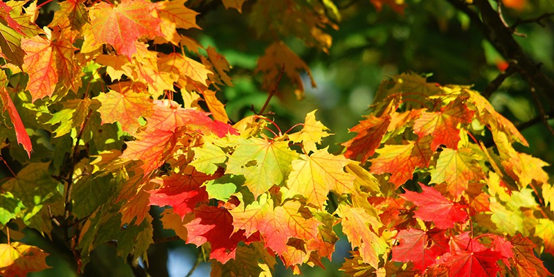 Famous Forests of the UK - Autumn is a great time of year for visiting forests