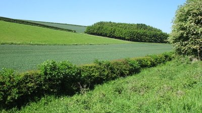 Small plantation and Garton Bottom close to the caravan site (© © Copyright Jonathan Thacker (https://www.geograph.org.uk/profile/46229) and licensed for reuse (http://www.geograph.org.uk/reuse.php?id=5405129) under this Creative Commons Licence (https://creativecommons.org/licenses/by-sa/2.0/).)