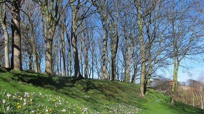 Spring flowers, Peasholm Park  (© © Copyright Stephen Craven (https://www.geograph.org.uk/profile/6597) and licensed for reuse (http://www.geograph.org.uk/reuse.php?id=5332471) under this Creative Commons Licence (https://creativecommons.org/licenses/by-sa/2.0/).)
