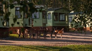 Static holiday homes - There is plenty of wildlife, such as deer etc., running close to the park