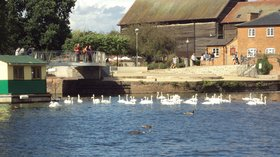 Swans on the River Avon at Stratford-upon-Avon (© By Rept0n1x (Own work) [GFDL (http://www.gnu.org/copyleft/fdl.html) or CC BY-SA 3.0 (http://creativecommons.org/licenses/by-sa/3.0)], via Wikimedia Commons (GFDL copy: https://en.wikipedia.org/wiki/GNU_Free_Documentation_License, original photo: https://commons.wikimedia.org/wiki/File:Swans_on_the_River_Avon_at_Stratford-upon-Avon_-_DSC08976.JPG))