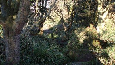Devonshire Road Rock Gardens (© jolmartyn [CC BY-SA 3.0  (https://creativecommons.org/licenses/by-sa/3.0)], via Wikimedia Commons (original photo: https://commons.wikimedia.org/wiki/File:Devonshire_Road_Rock_Gardens_-_panoramio_(3).jpg))