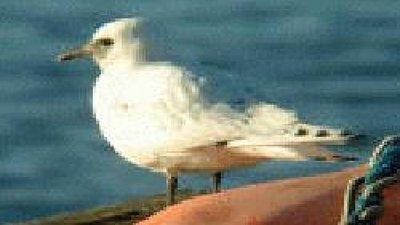 Bird near the site