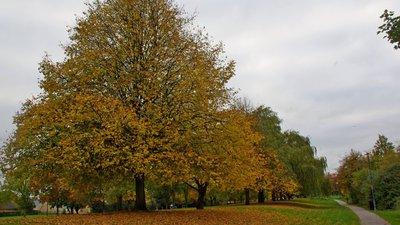 Cambridgeshire holidays - Four Winds Leisure, Cambridgeshire