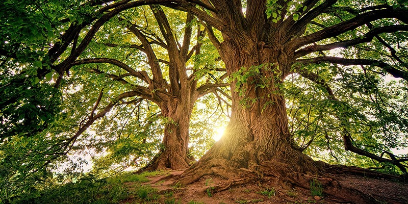 Famous Forests of the UK - The tranquillity of the trees.